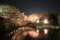 もう一度夜桜 - 西美濃逍遥1