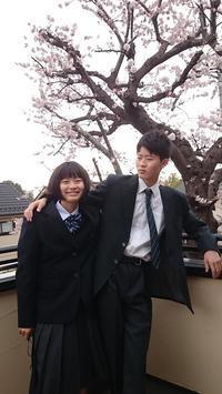★見守り桜★ - テンパーめがねNEW