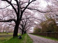桜は埼玉、どこまでもお花見散歩! - まみみ暮らし