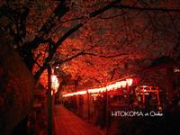夜桜 - カメラでヒトコマ