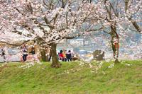 流川の桜並木 - こんな日は空を見上げてⅡ