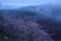 吉野山 雨降る夜明け - ratoの大和路