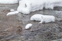 冬の北海道旅行 その35 (養老牛 アオシギ) - 夫婦でバードウォッチング