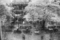 桜雨 - Photo & Shot