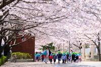 桜色にまみれて、春感お花見日和 - PhotoWalker*