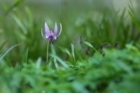 紫一点 - PhotoWalker*