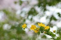 春を楽しむ - PhotoWalker*