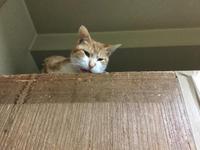箪笥は猫禁止 - ねこ結び2