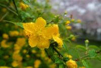 気になる黄色 - 役に立ちそうでなかなか役に立たないような気がするブログ