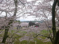 4月9日 お花見ツーリング 明日香へ - 服部産業株式会社サイクリング部(2冊目)