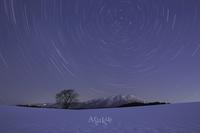 冬の一本桜 - Aruku