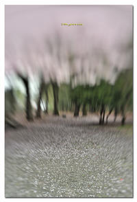 桜流し - toru photo box