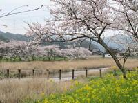 粋な花見 - 皿倉山の見える家