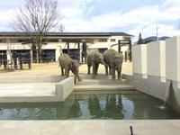 京都市立物園にて - 象を読む人 象を書く人