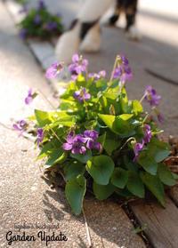 ガーデニングの季節到来。裏庭の様子(4月上旬) - Kyoko's Backyard ~アメリカで田舎暮らし~