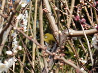 忙しい春 - Busy spring  for a bird  - JasmineTea Randomshots