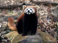 4月10日(月) 満開 - ほのぼの動物写真日記