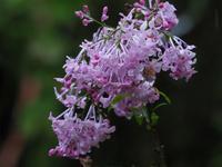 菜種梅雨 - 南風のデジタル写真日記