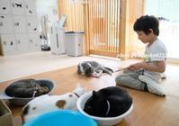 にゃんにゃんデート - nyaokoさんちの家族時間