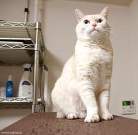 きょうも - 賃貸ネコ暮らし|賃貸住宅でネコを室内飼いする工夫