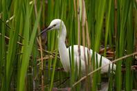 短時間の鳥撮り出撃 - デジタルカメラで遊ぶ 気まぐれ備忘録