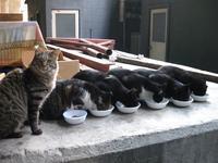 奇跡の猫写真 - 世界はぜーんぶ星座通りにできている♪
