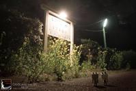 DANBOARD Vol.181 - 箱庭の休日