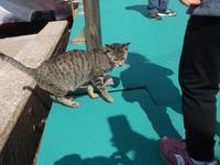 A・ジイド「田園交響楽」 - シェークスピアの猫