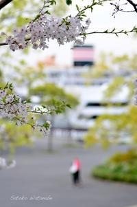 今日のさくら 4月10日@横浜 - 今日の小さなシアワセ