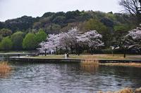 21世紀の森の桜、松飛台のパスタ屋さん、クローバー - しゃしん三昧   ~シグマ、レクサス、着物の日々~