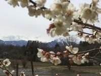桜開花の前にまた雨が降る・・ - オーガニックな日々