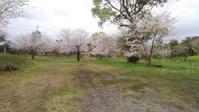 桜の季節だけ開く~磯山公園 - おでかけメモランダム☆鹿児島