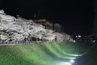 夜桜 - フェイズと写真と時々・・・!