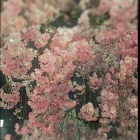 花よりパクチー - 上海通い婚の日々 *そして再び国際別居婚へ*