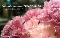 5月14日(日)は、母の日です・・。 - 葉っぱと花と・・。