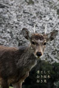 奈良春色 - 螺子花便り