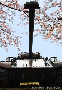 桜 - ぼんぼんトントン 写真