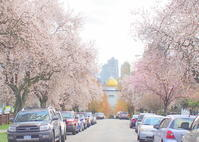 エキゾチック 春 - 花散歩写真 in Vancouver