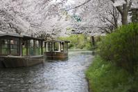 春桜 - Now and Here