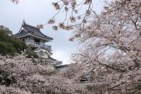 満開の桜とお城♪ - happy-cafe*vol.2