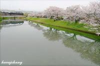 やまぐち淡色桜 - 蒸気をおいかけて・・・少年のように
