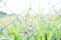 待ちに待った春ですね‥ - 鈴木寿のブログ  フライフィッシングな毎日