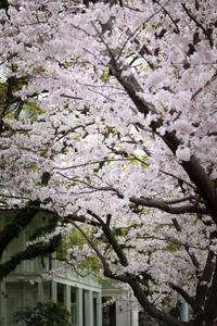 東山手さるく 紅茶を楽しむ 春のペアリングランチ セトレ - 阿野裕行 Official Blog