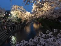 4月9日(日)岩倉桜まつり - 高桑敏直ファンページ