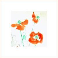 《 雛罌粟 咲く。》 - 『ヤマセミの谿から・・・ある谷の記憶と追想』