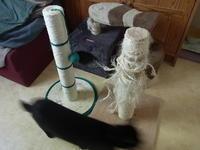 まったくもって、消耗品 - 『ココんちの(3+1)+1+1猫と一犬のたわごと』 (2+1)+1+1 Pitchouns et 2 Pitchounettes