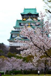 大阪城を西の丸庭園から見た桜 - とりあえず撮ってみました