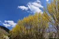 一躍の春:1:浪速の桃源郷 - walk with my Camera