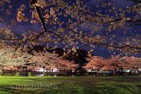 片上公園の桜 - みちはた写真館フォトギャラリー