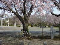 春の花を見にポタリング - 自転車走行中(じてんしゃそうこうちゅう)